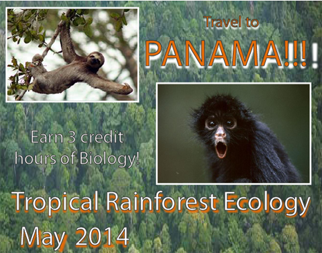 Tropical rainforeest ecology flyer