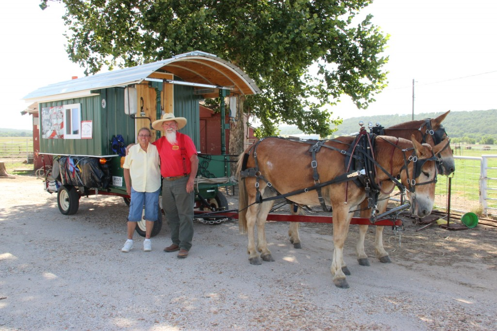 2 mules 1 (2)